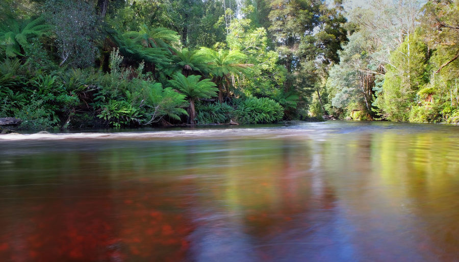 Styx Styx River Beauty In Nature Flowing Flowing Water Forest Growth Motion Nature No People Plant Rainforest River Scenics - Nature Tannin Tasmania Tranquility Tree Water Waterfront