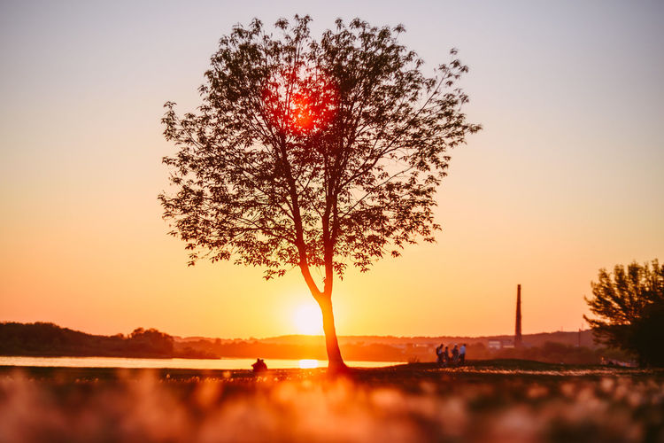 Tree in sunset Beauty In Nature Clear Sky Close-up Day Freshness Growth Nature No People Orange Color Outdoors Scenics Sky Sun Sunset Tranquil Scene Tranquility Tree Tree In Sunset