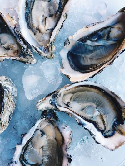 Oysters Oyster Shell Sea Luxurylifestyle  Food Oyster  No People High Angle View Close-up Full Frame Day Land Outdoors Seafood Nature Beach