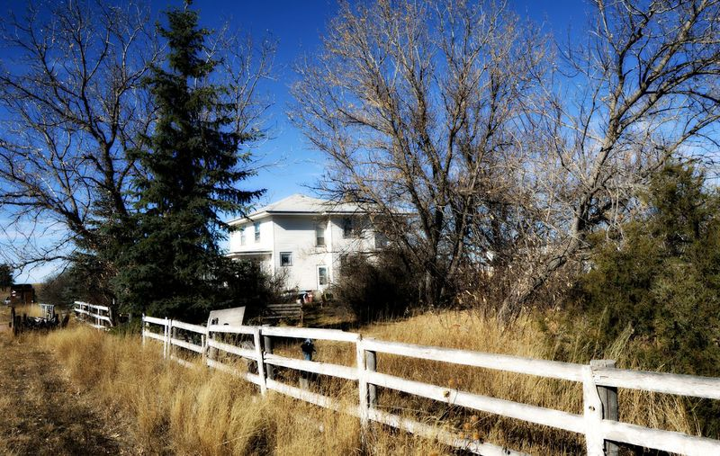 House in distance Bare Tree Beyond The Trees, Building Exterior Clear Sky No People Old House Outdoors White Siding