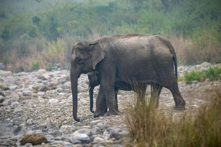 Elephant walking in a forest