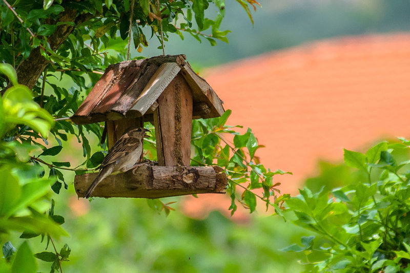 Close-up of birdhouse on a tree