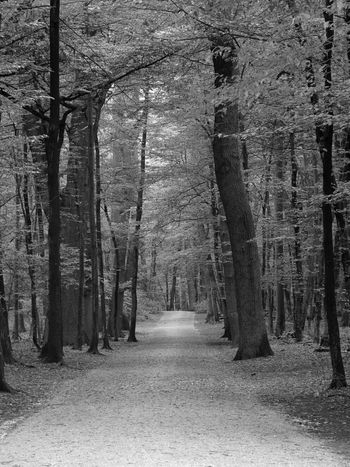 Endlessness Come Walk With Me Into The Woods EyeEm Nature Lover Nature_collection Black And White Photography POETRYANDSOUL Pictures Tell More Then Stories Come With Me And Let Me Show You My World