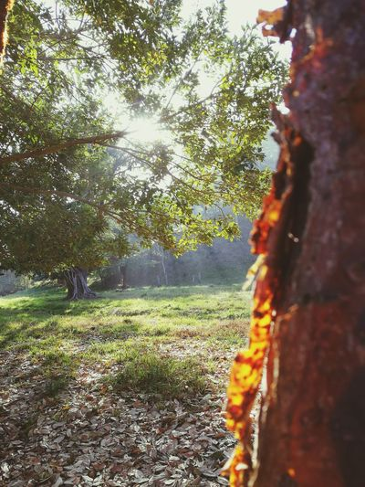 The Week On EyeEm Tree Sunlight Nature Day Outdoors No People Growth Sky Beauty In Nature EyeEmNewHere