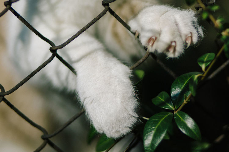 Close-up of cat seen through chainlink fence