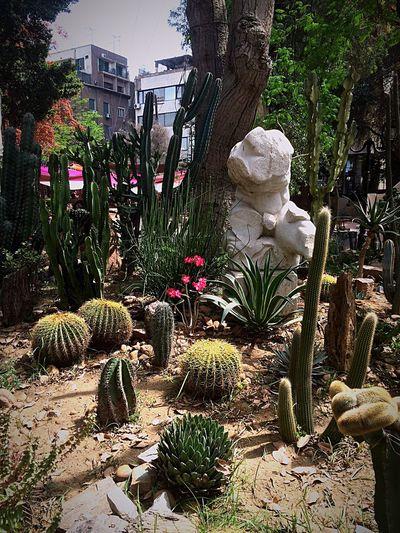 Statue Sculpture Garden Sculptures Garden Photography Garden Garden Love Pink Pink Flower Cactus Fine Art Photography Mobilephotography Mobilephoto Photography Photooftheday From My Point Of View