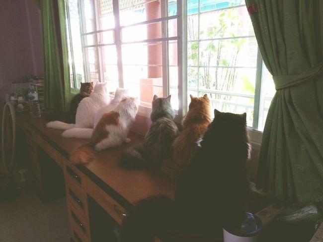 °-° Cat Cats Cat♡ Catcatcat