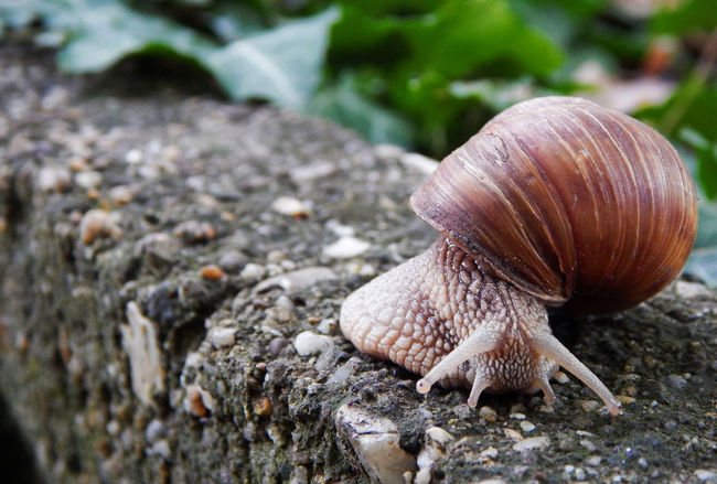 Animal Themes Animals In The Wild Close-up Forest Nature No People One Animal Outdoors Shell Snail