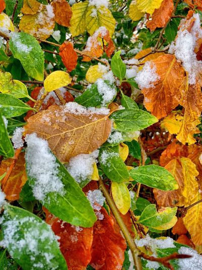Snow ❄ Snow on Autumn Leaves in the Garden Leaves_collection Colours IPS2015Fall Eye4photography  From My Point Of View Taking Photos IPhoneography