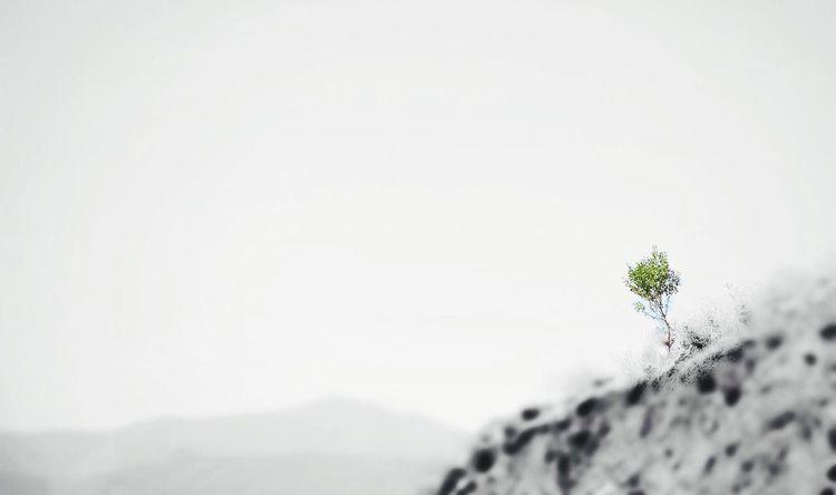 🍁🍃 awaiting for spiring 🍁🍃 Minimal Minimalism Minimalmood Spiring Autumn Lonely Lonesomeness Splashing Splash Blackandwhite Black And White Black & White Blackandwhite Photography Tree