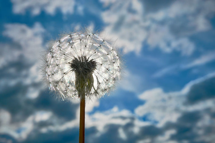 https://youtu.be/g8gtjnvNqds Sky Cloud - Sky Dandelion Nature Flower Day Freshness No People Plant Low Angle View Flowering Plant Outdoors Blue White Color Fragility Close-up Beauty In Nature Sunlight Plant Stem Dandelion Seed Wind Flower Head Softness