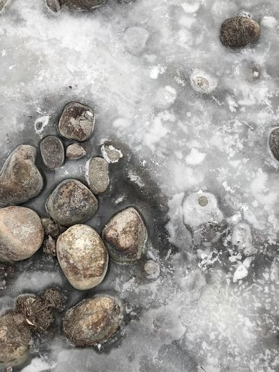 Rocks in ice Frozen In Place Ice Frozen Rocks No People Nature Full Frame Day Water High Angle View Close-up Outdoors