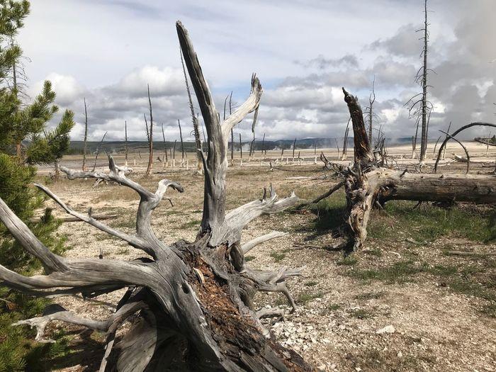 Fallen tree on field against sky