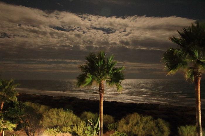 Sea Sea Coast Sea Colours Spain♥ SPAIN Marbella Palm Tree Nature Beauty In Nature Sky Night Sky Night Skylight Night Sky Moonlight Nature Beauty In Nature EyeEm Nature Lover Night Sea