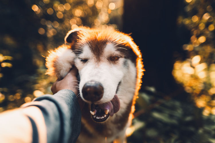 Close-up of hand petting dog