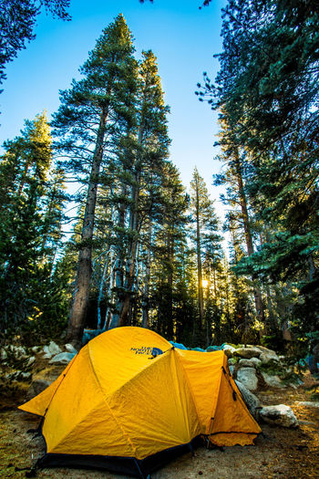Adventure Backpacking Beauty In Nature Camping Campsite Day Mountain Nature No People Non-urban Scene Outdoors Pine Tree Pinetrees Scenics Solitude Tall Tent Tranquil Scene Tranquility Tree Wilderness Yellow Yosemite Yosemite National Park