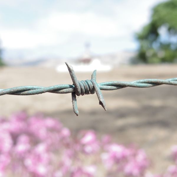 Barbed wire fence around property in California. Agriculture Barbed Wire Copy Space Green Color Pink Square Beauty In Nature Close-up Day Flower Focus On Foreground Fragility Metal Nature No People Outdoors Sky Spur