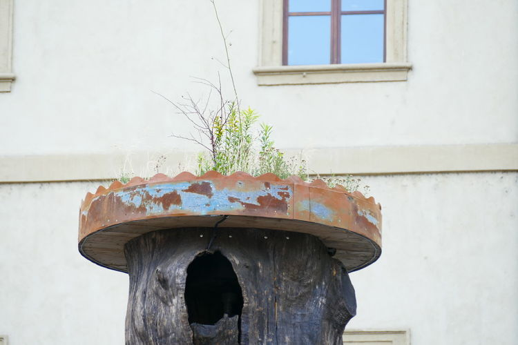 Architecture Central Park Czech Czech Republic Nature Plant Prague Reflection Tree Tree Trunk Background Backgrounds Beauty In Nature Branch Building Flower Flowers Hole Hole Of Tree Leaf Roses Trunck Window Windows Yard