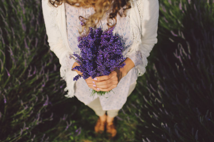 Low Section Of Woman Holding Lavenders On Field