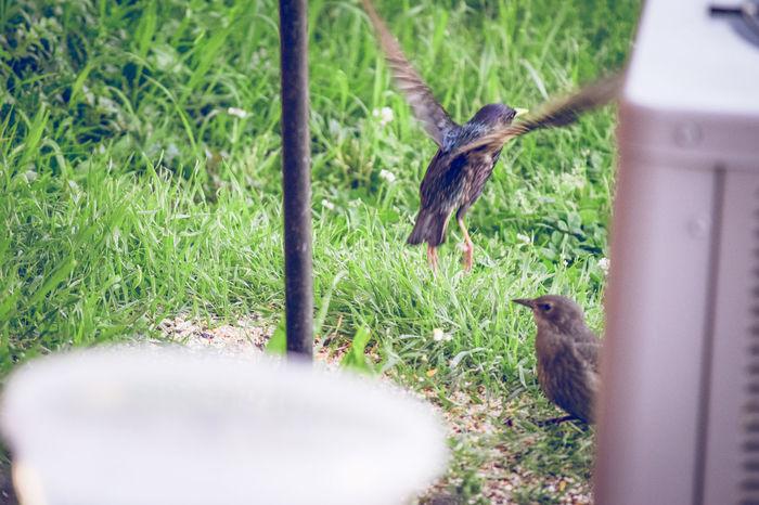 Baby Bird Bird Feeder Bird In Flight Birds Flying Bird Mother And Baby Nature Parenthood Wildlife