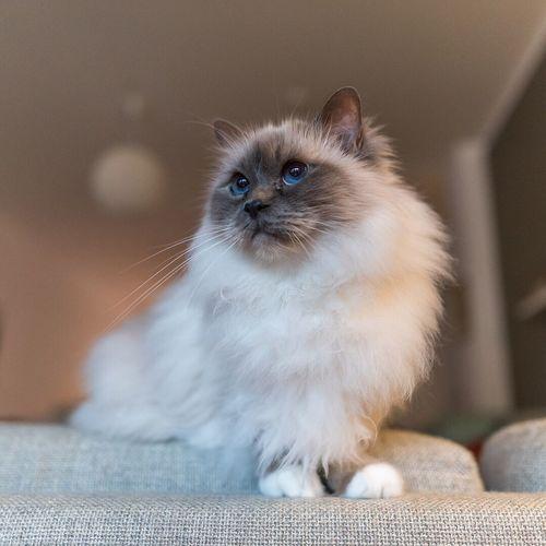 Close-up portrait of kitten sitting on floor