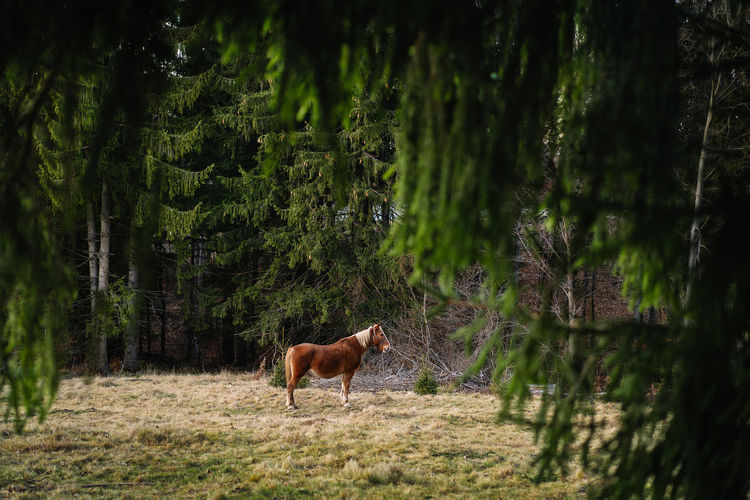 Horse standing in a forest
