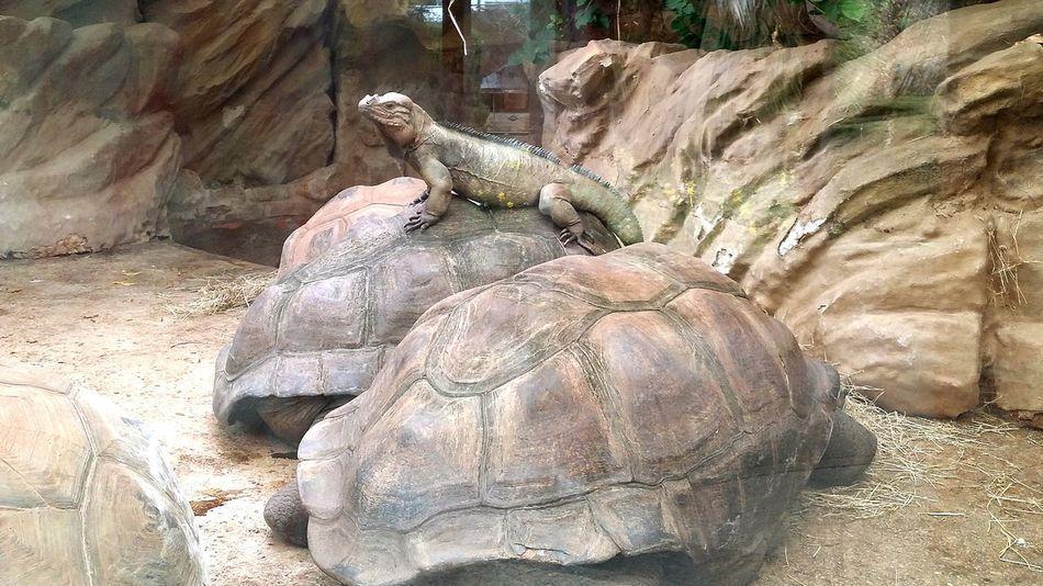 Bristol Zoo EyeEm Best Shots Tortoise Dragon EyeEmBestPics Giant Tortoise