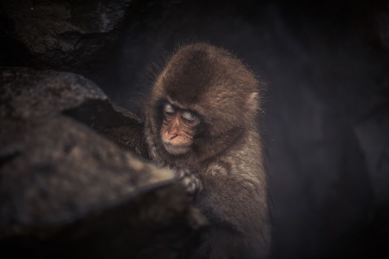 High Angle View Of Monkey At Night