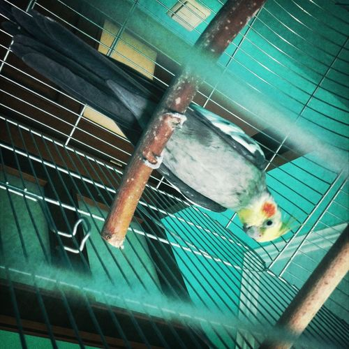 Say hi to my parrot :*