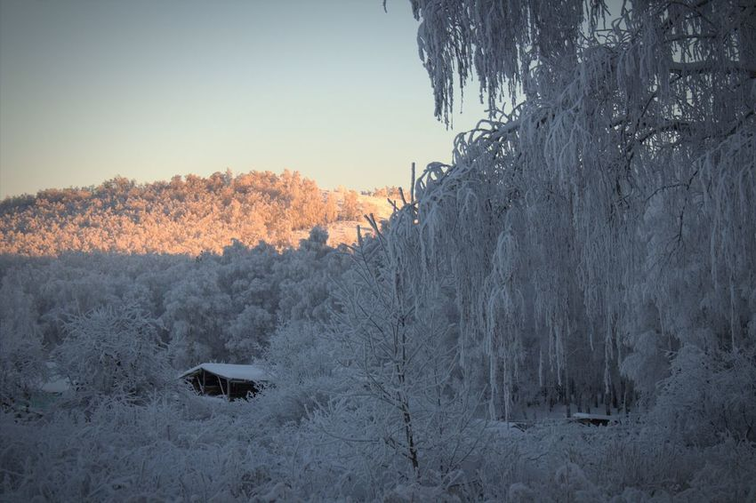 Winter Forest Uchaly Bashkortostan Ural Russian Nature Russian Winter First Eyeem Photo Beautiful Russia Russian Girl Gectorfontroy