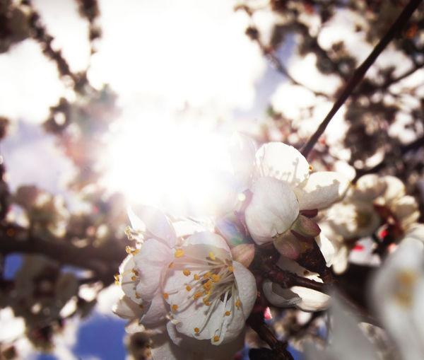 Close-up of flower on tree