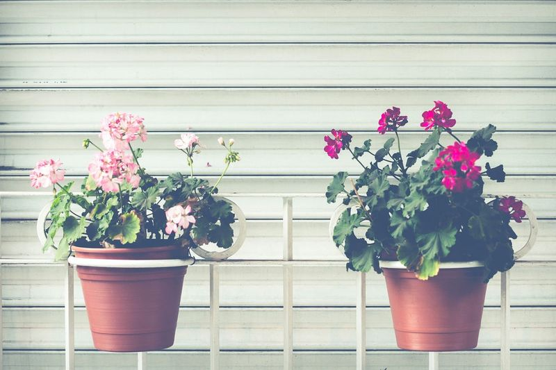 Flowerpots Flowerpot Flower Pair Two Two Of A Kind Color Urban Nature Urbanexploration White Copy Space