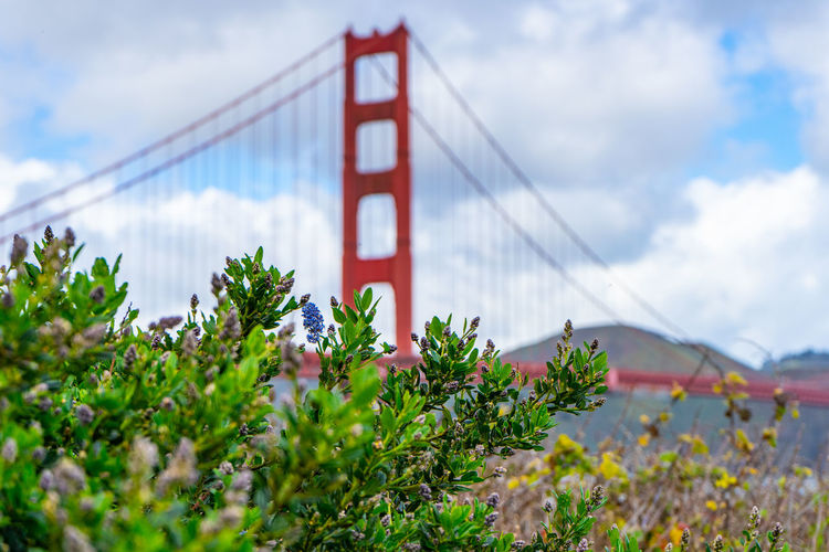 Suspension Bridge Built Structure Sky Architecture Connection Bridge - Man Made Structure Bridge Nature Plant Transportation Engineering Travel Destinations Cloud - Sky Travel Day Tourism Red Bay Growth Outdoors