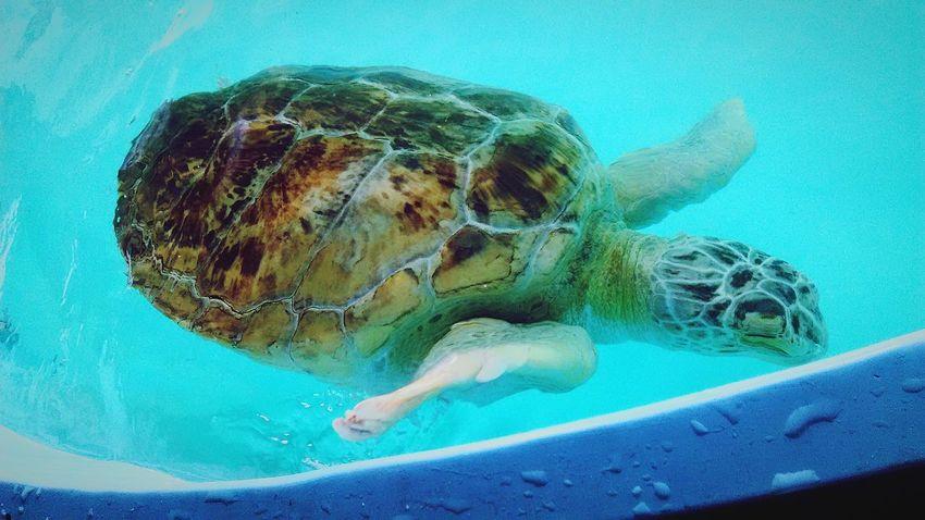 Rescue Seaturtle Safe Water Sea Turtle Inc Beautiful Creature