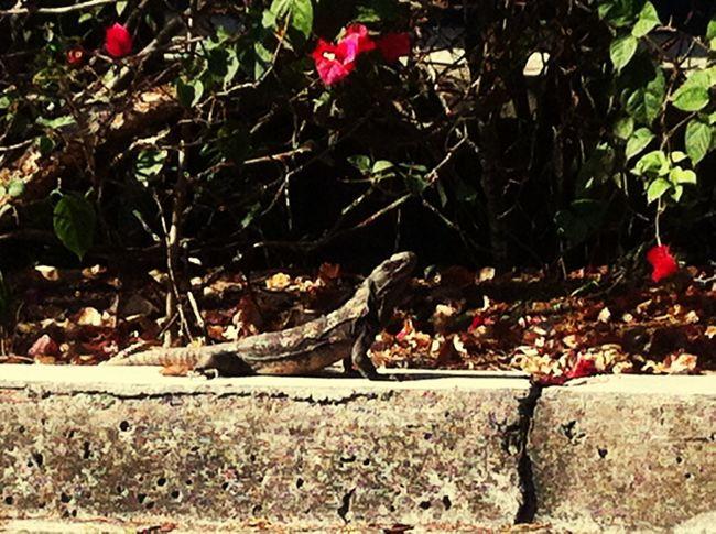 Reptile Nature Reptiles