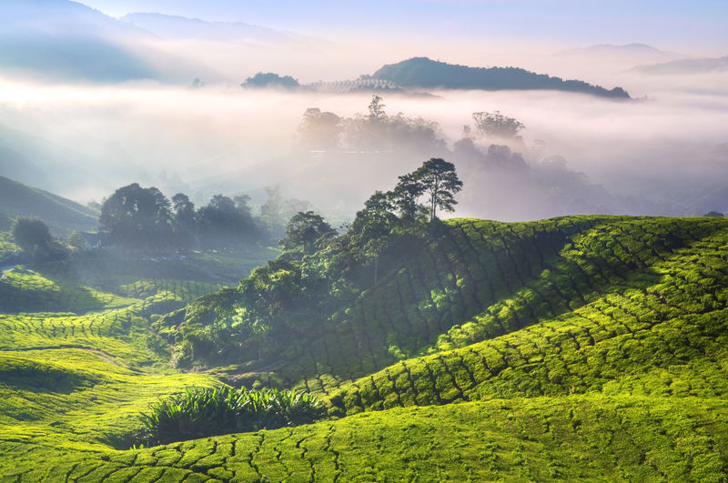 Beauty In Nature Environment Fog Green Color Growth Hazy  Idyllic Land Landscape Mountain Nature No People Non-urban Scene Outdoors Plant Plantation Rural Scene Scenics - Nature Sky Tea Crop Tranquil Scene Tranquility Tree