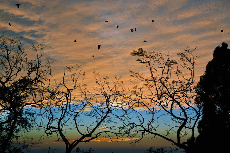 Sunset in Forest.. Colours Of India Colours Of Sunset.. Golden Sunset Animal Themes Animal Wildlife Animals In The Wild Beauty In Nature Bird Cloud - Sky Colourful Clouds Colours Of Nature Colours Of Sunset Flock Of Birds Sky
