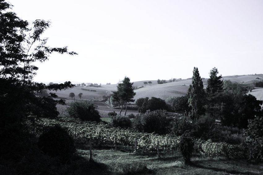 Landscapes in Montecchio, Italy The Week On EyeEm Beauty In Nature Black And White Clear Sky Day Field Grass Growth Landscape Nature No People Outdoors Scenics Sky Tranquil Scene Tranquility Tree