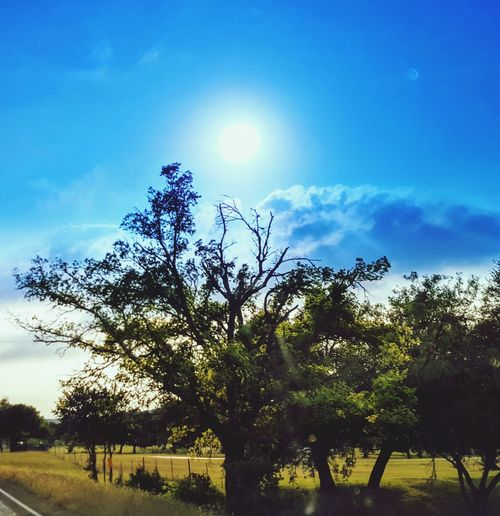Tree Nature Cloud - Sky Sky Outdoors Beauty In Nature Sunlight Sun Texas Hill Country Tranquility