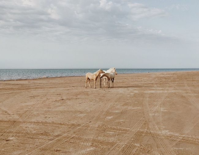 Horses standing at beach against sky