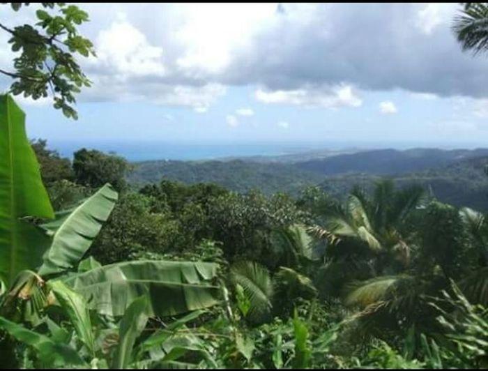 Taking Photos Check This Out Amazing View Sanjuan Jungle Beautiful Green Puerto Rico Thegreatoutdoors2015EyeemAwards