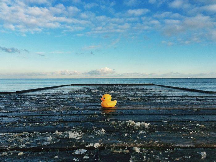 Rubber Duck On Frozen Pier By Sea Against Sky