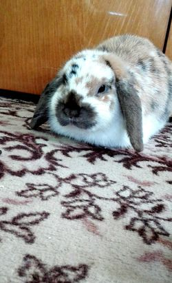 Pets Domestic Animals Animal Themes No People Day MyLove ♡ Bunny 🐰 Lovehim❤ Suterday Czech Republic🇨🇿