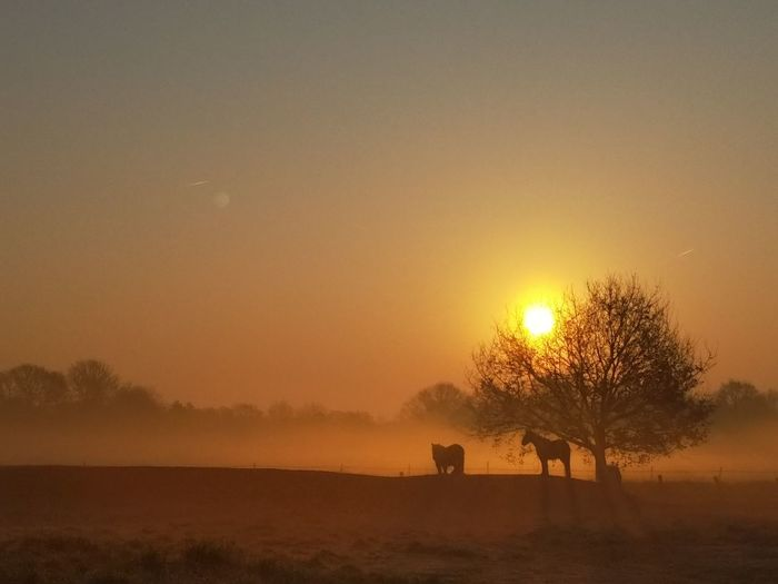 Fog in the morning. A sunrise to remember. Fog Morning Sunrise Horse Horses Nature Tree Clear Sky Dawn Safari Animals Silhouette Group Of Animals Sky Grazing Pony