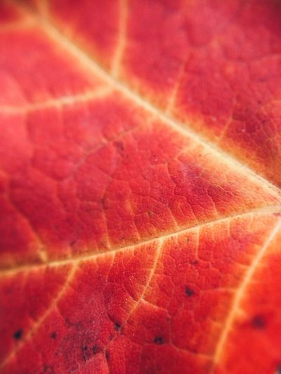 What is it? Leaves Nature Nature_collection Macro
