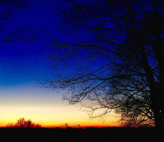 Silhouette Light And Shadow Beauty In Nature Nature Tree Tranquility Scenics Sunset Sky Tranquil Scene Bare Tree No People Idyllic Outdoors Landscape Branch Blue Growth Day Perspectives On Nature EyeEm Best Shots - Nature Eyeem Natur Lover EyeEm Masterclass EyeEm Nature Lover EyeEm Best Shots
