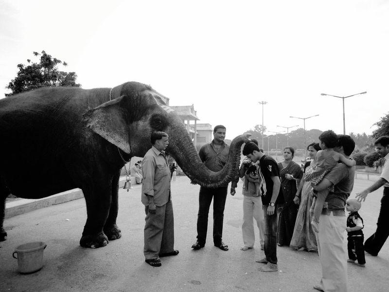 Adventure Buddies Lord Shiva Temple Elephantlove Blessings Friends ❤ People Tourists Villagers Karnataka Elephant Man Symboloflove Godganesh Black And White Feel The Journey Banglore Festival Season