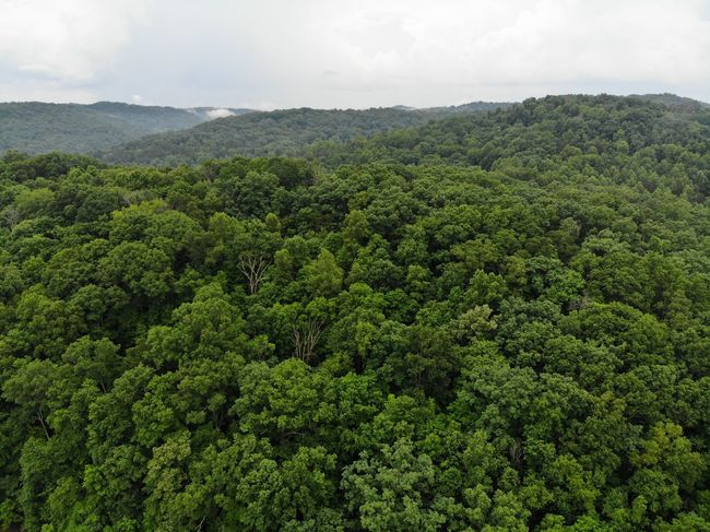 Aerial View Aerial Shot Aeriel Photo Dronephotography Forest Photography Treelines Green Trees Textures and Surfaces Texture Textured  Forest Mavic Air Tea Crop Tree Tree Area Rural Scene Agriculture Sky Landscape Green Color Lush - Description Grove Lush Foliage Pine Woodland Evergreen Tree Coniferous Tree Woods Greenery Glade
