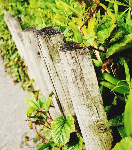 Fence in the zoo. Wood Paling Railing Fence Zoo One Animal Animal Themes Insect Animals In The Wild Animal Wildlife Wood - Material No People Green Color Nature Plant
