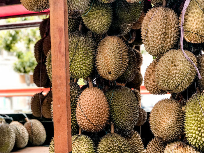 Close-up of fruits on cactus at market